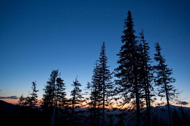 Árvores coroadas de neve sobre colinas e vales