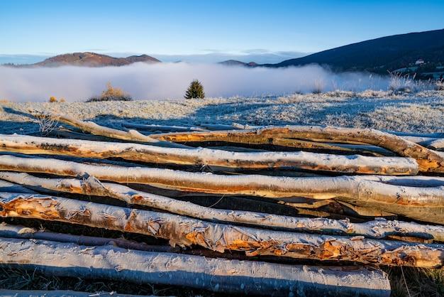 Árvores cortadas usadas para aquecimento de casas ficam no solo congelado em climas frios