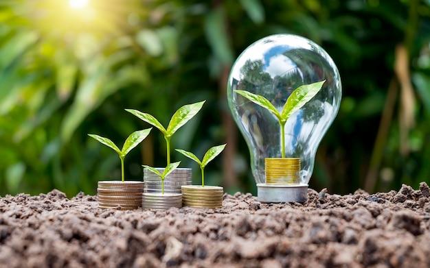 Árvores crescem em moedas em lâmpadas economizadoras de energia economizando energia