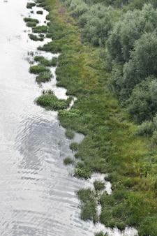 Árvores crescem na margem do rio