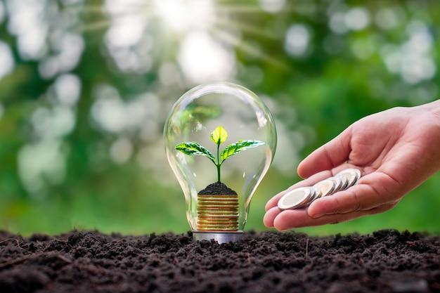 Árvores crescendo em moedas em lâmpadas economizadoras de energia, incluindo mãos dando moedas