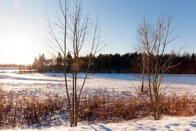 Árvores crescendo em uma floresta no inverno