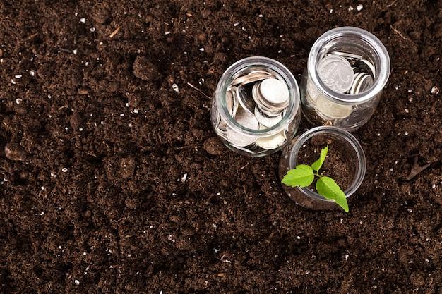 Árvores, crescendo, ligado, moedas