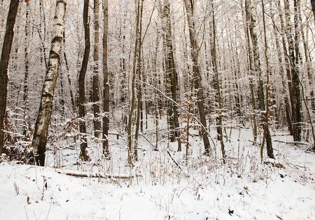 Árvores crescendo na floresta no inverno