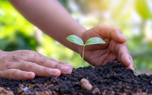Árvores crescendo no solo e mãos humanas cuidando das árvores conceito do dia da terra e campanha de aquecimento global