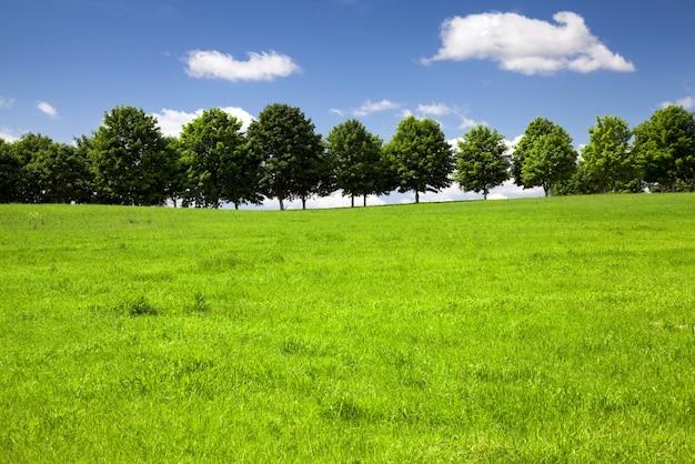 Árvores crescentes no verão. bielo-rússia