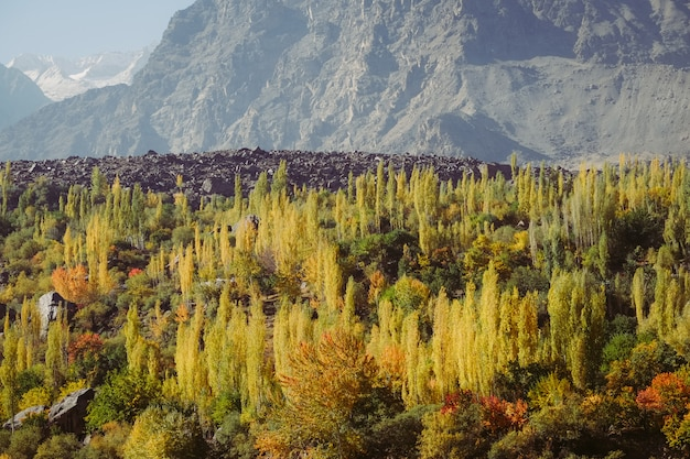 Árvores da floresta colorida na cordilheira karakoram no outono