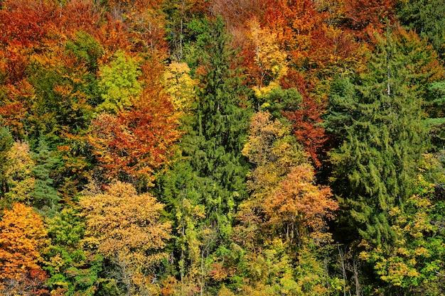 Árvores da floresta de outono fechadas com cores vibrantes de amarelo e verde