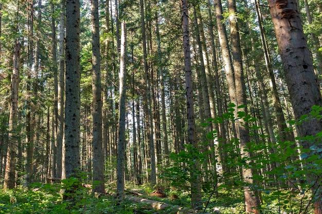 Árvores da floresta de outono. natureza verde madeira luz solar fundos