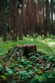 Árvores da floresta linda fada