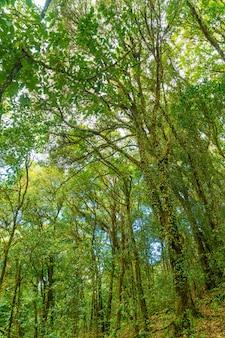 Árvores da floresta. natureza verde madeira luz solar e céu