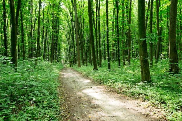 Árvores da floresta. natureza verde madeira luz solar
