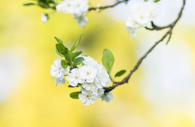 Árvores de ameixa