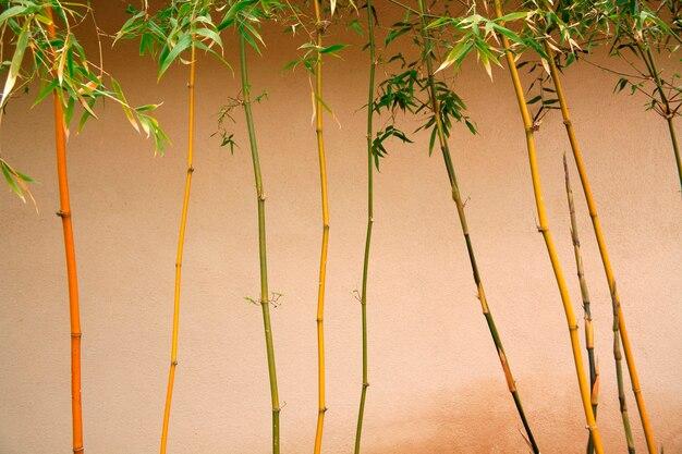 Árvores de bambu na frente da parede