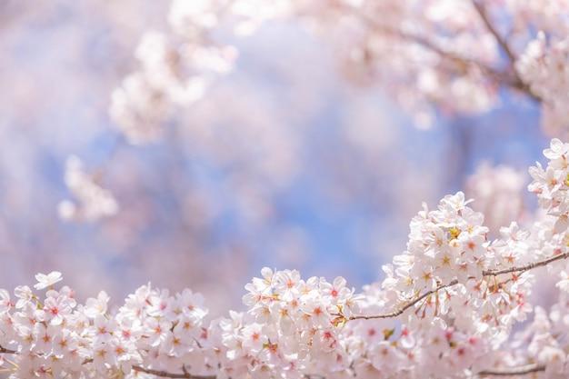 Árvores de cerejeira