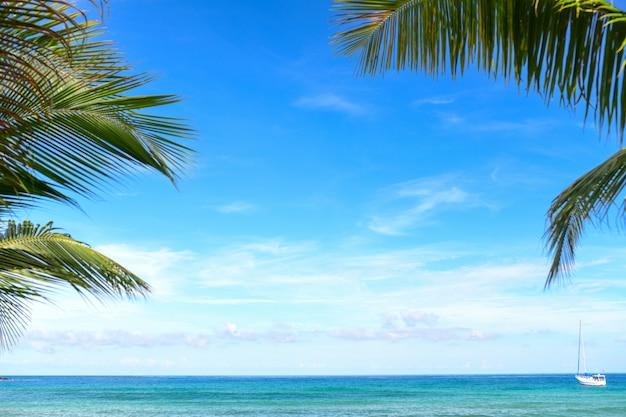 Árvores de coco e praia tropical para o fundo.