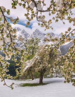 Árvores de folhas verdes com terreno nevado e montanhas