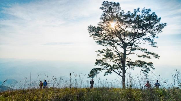 Árvores de galho de silhueta sem folhas contra o céu nublado e a paisagem de vidro.