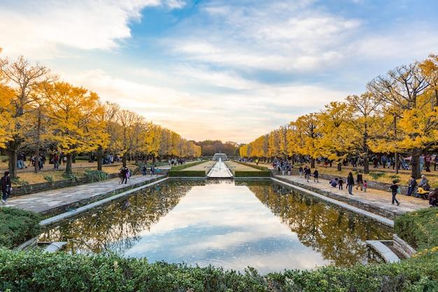 Árvores de ginkgo outono