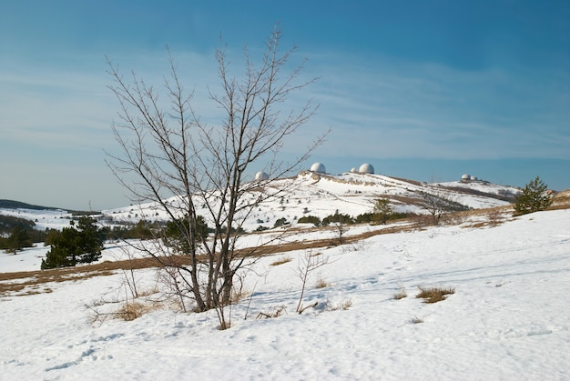 Árvores de inverno nas montanhas.