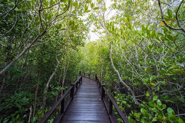 Árvores de mangue com ponte de madeira na tailândia
