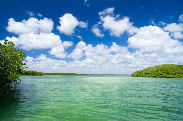 Árvores de mangue no mar do caribe