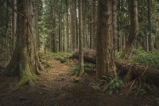 Árvores de mistério