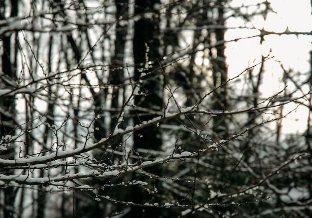 Árvores de neve do inverno