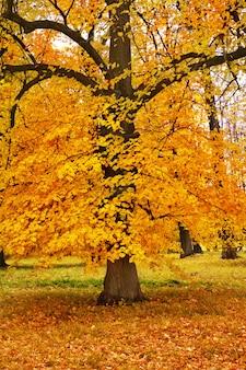 Árvores de outono coloridas no parque