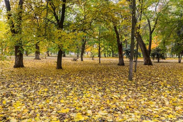 Árvores de outono e folhas no parque da cidade. paisagem de outono
