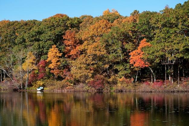 Árvores de outono nos hamptons