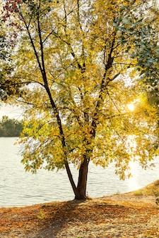 Árvores de outono, outono dourado, paisagem de outono, fundo de outono, com folhas amarelas nas árvores