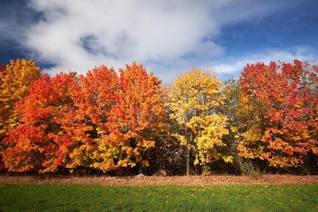 Árvores de outono vermelhas e amarelas contra o céu azul