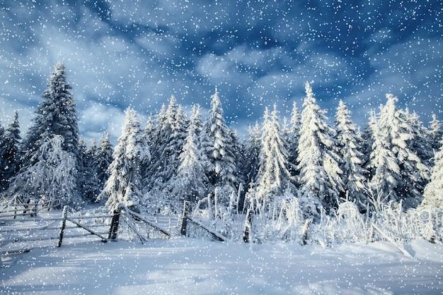 Árvores de paisagem de inverno e vedação no gelo