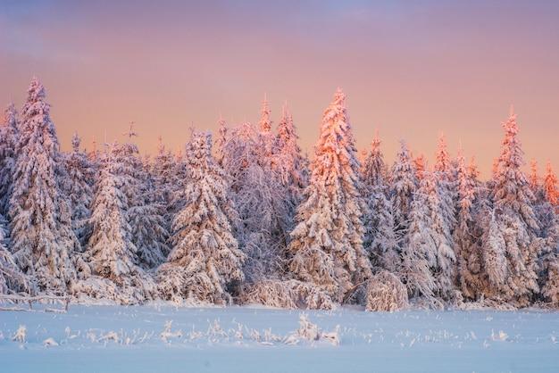Árvores de paisagem de inverno na neve