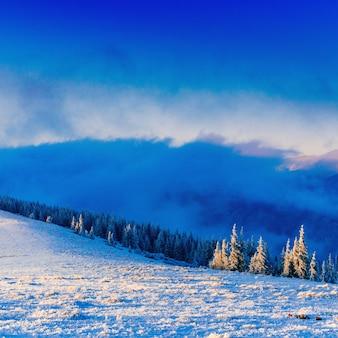 Árvores de paisagem de inverno no gelo. cárpatos ucrânia europa