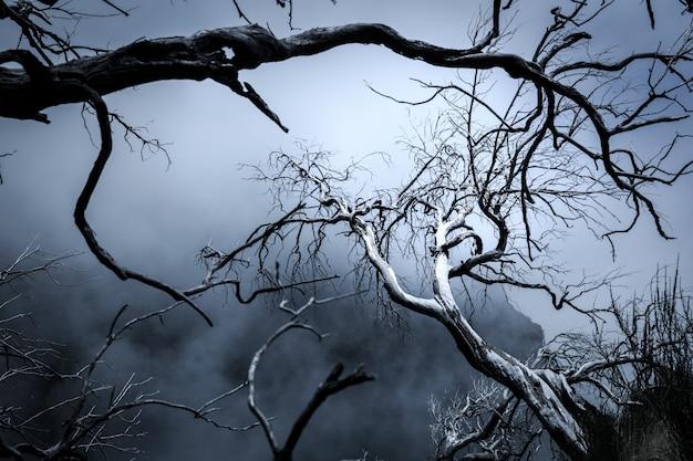 Árvores de pesadelo