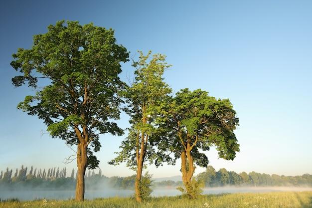 Árvores de primavera à beira do lago