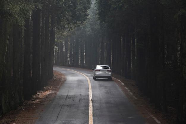 Árvores de rua na ilha de jeju, coréia