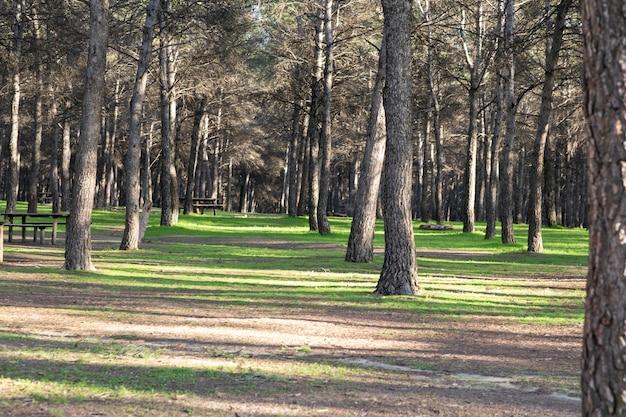 Árvores de uma bela floresta com grama verde