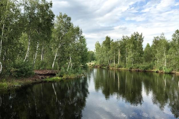 Árvores de vidoeiro crescem na margem do rio, que reflete o céu com nuvens