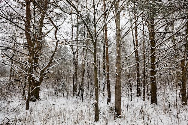 Árvores decíduas após queda de neve e geada