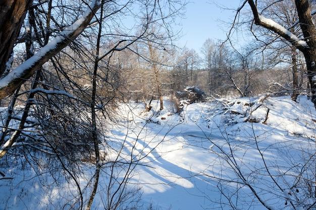 Árvores decíduas cobertas de neve e geada no inverno