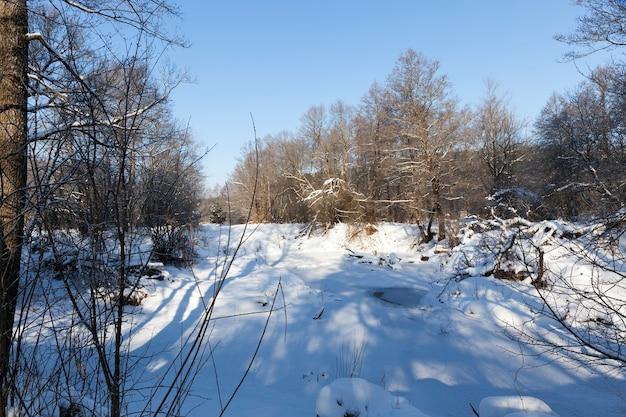 Árvores decíduas cobertas de neve