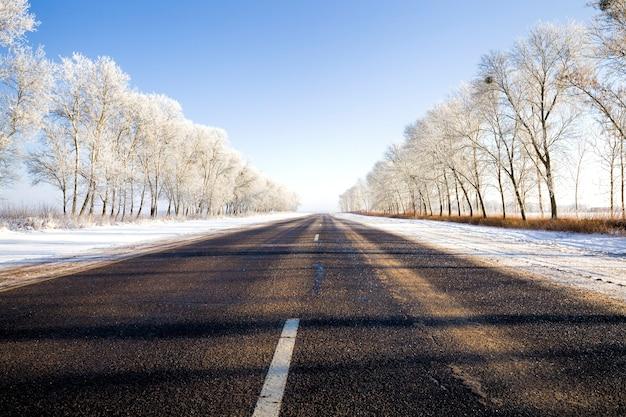 Árvores decíduas crescendo ao longo da estrada