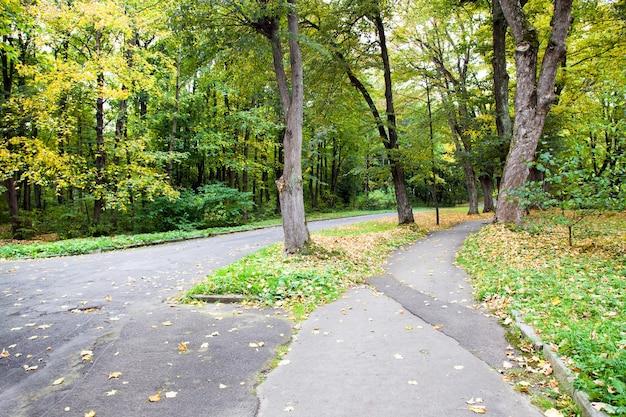 Árvores decíduas crescendo no outono do ano