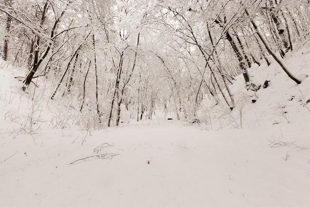 Árvores decíduas nuas na neve no inverno