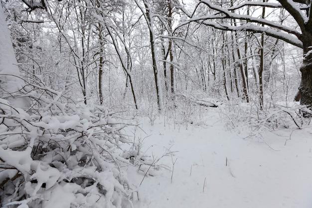 Árvores decíduas sem folhagem no inverno