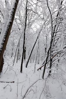 Árvores decíduas sem folhas na neve após nevascas