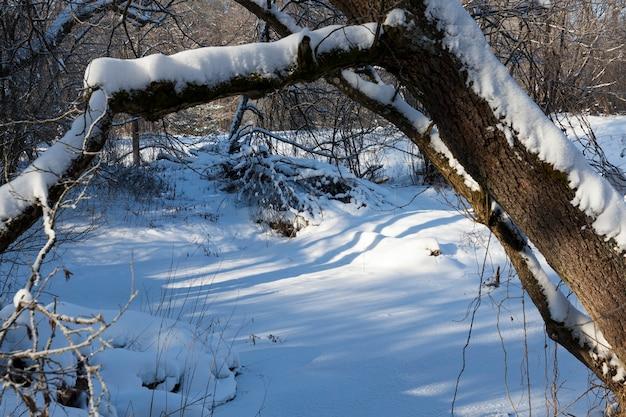 Árvores decíduas sem folhas Foto Premium